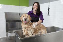 Como Montar um Banho e Tosa em Casa